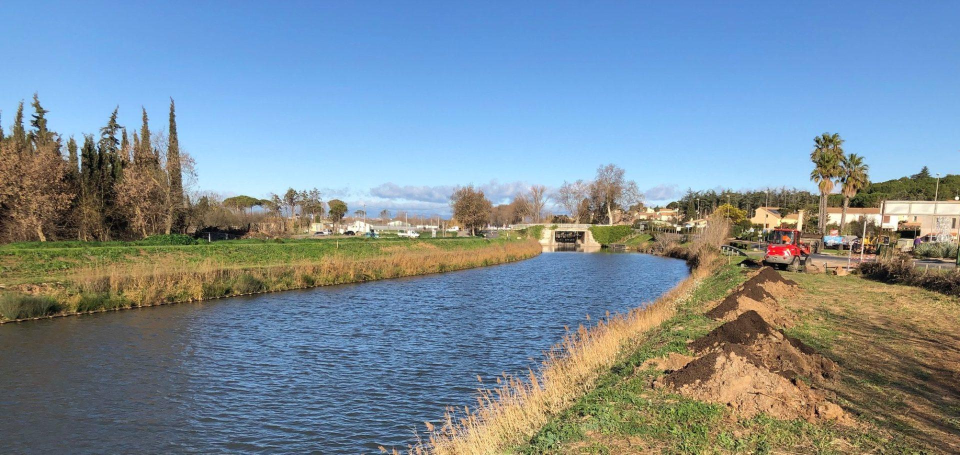 Abattage des platanes et replantation du Canal du Midi